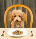 Comment nourrir un chien ?